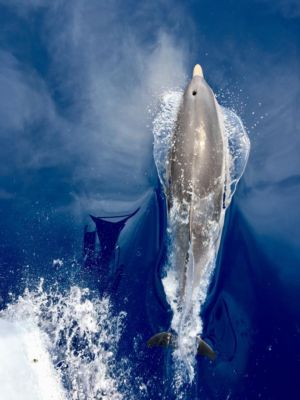 Delfinesgrecia