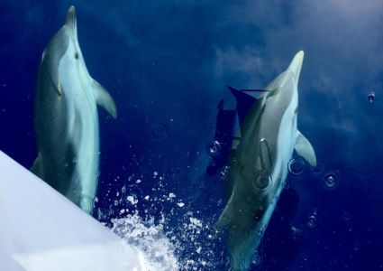 Delfinesgreciaenbarco
