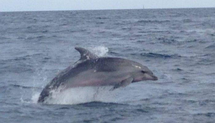Delfines cerca de puerto. ¡Quizá con la licencia de navegación veas alguno incluso!