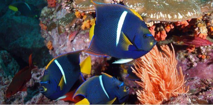 submarinismo-tesoros-marinos