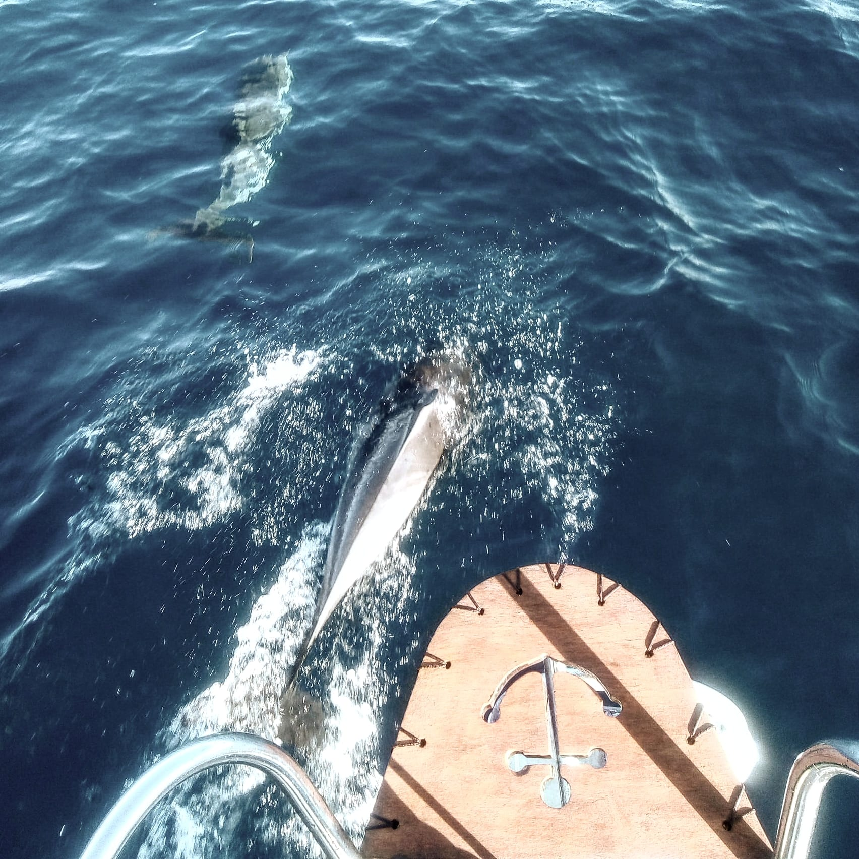 delfines con velero
